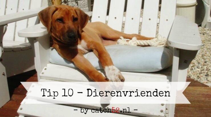 Tip 10 Amsterdam restaurant horeca diervriendelijk hond